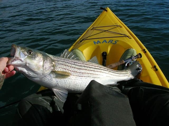 kayak bass fishing tips
